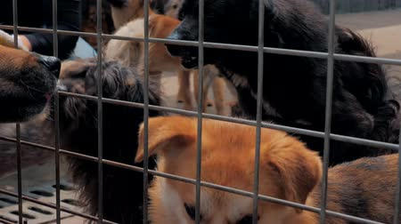 enclosure : Sad dogs in shelter behind fence waiting to be rescued and adopted to new home. Shelter for animals concept
