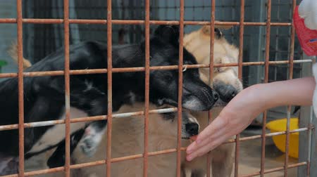 animal adoption : Sad dogs in shelter behind fence waiting to be rescued and adopted to new home. Shelter for animals concept