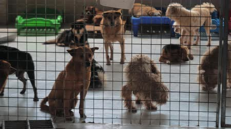 trançado : Sad dogs in shelter behind fence waiting to be rescued and adopted to new home. Shelter for animals concept
