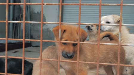 unloved : Sad puppies in shelter behind fence waiting to be rescued and adopted to new home. Shelter for animals concept