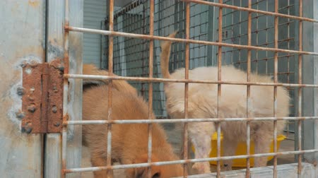 enclosure : Sad puppies in shelter behind fence waiting to be rescued and adopted to new home. Shelter for animals concept