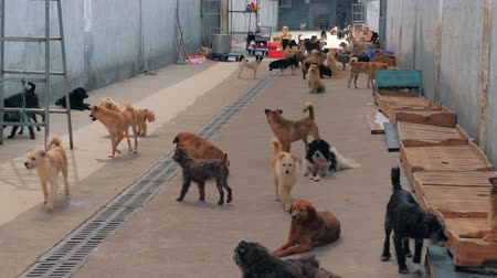 zanedbaný : Unwanted and homeless dogs of different breeds in animal shelter. Looking and waiting for people to come adopt. Shelter for animals concept Dostupné videozáznamy