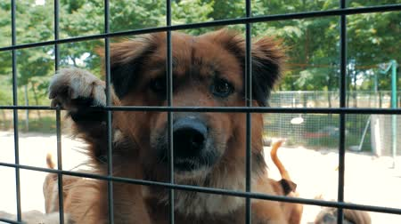 enclosure : Portrait of sad dog n shelter behind fence waiting to be rescued and adopted to new home. Shelter for animals concept