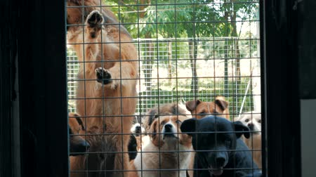 unloved : Sad dogs in shelter behind fence waiting to be rescued and adopted to new home. Shelter for animals concept