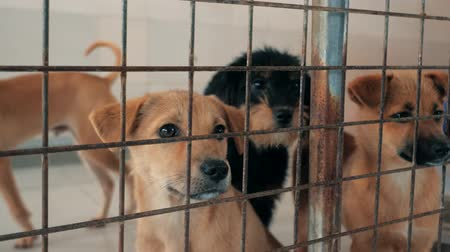 unloved : Close-up of sad puppy in shelter behind fence waiting to be rescued and adopted to new home. Shelter for animals concept Stock Footage