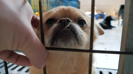 zbloudilý : Close-up of male hand petting caged stray dog in pet shelter. People, Animals, Volunteering And Helping Concept.