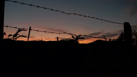 capturados : Barbed wire silhouette, close-up of a prison or military fence at sunset. Barbed wire steel wall. Vídeos