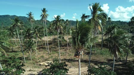vakok : Aerial drone shot of coconut palm trees on beautiful tropical island in sunny summer Stock mozgókép