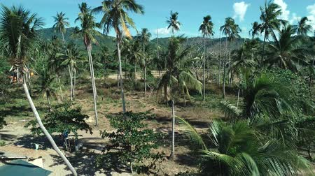zonwering : Aerial drone shot of coconut palm trees on beautiful tropical island in sunny summer Stockvideo
