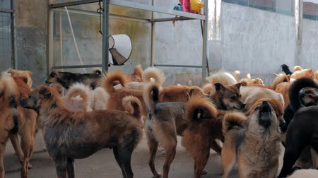 trançado : Sad dogs in shelter waiting to be rescued and adopted to new home. Shelter for animals concept Stock Footage