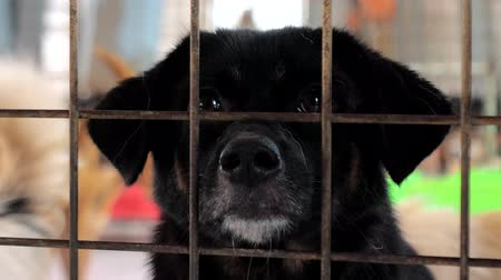 kennel : Portrait of sad mixed breed dog behind the fences. Dog in a shelter or an animal nursery. Shelter for animals concept. Stock Footage