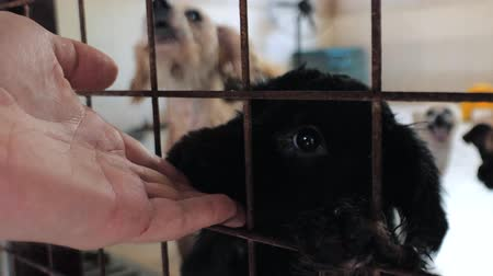 bondade : Close-up of male hand petting caged stray dog in pet shelter. People, Animals, Volunteering And Helping Concept.