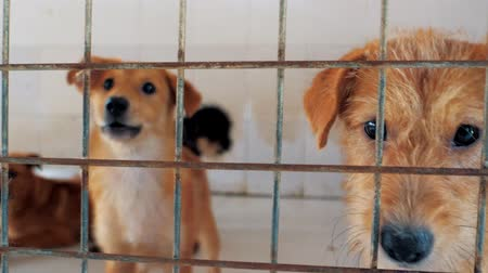 pobre : Different mixed breed dogs behind the fences. Dogs in a shelter or an animal nursery. Shelter for animals concept.