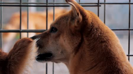 trançado : Backview of sad mixed breed dog behind the fences. Dog in a shelter or an animal nursery. Shelter for animals concept. Stock Footage