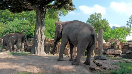 pień : Happy young indian elephant dancing at zoo on sunny day