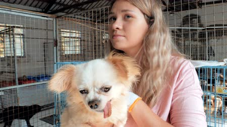 animal adoption : Close-up of female volunteer holds on hands dog in shelter. Shelter for animals concept Stock Footage