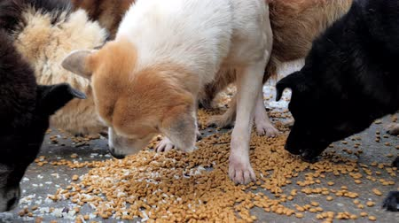dog pound : Close-up of hungry dogs eating dry food from he floor in shelter. Stock Footage