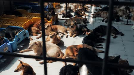enclosure : Different mixed breed dogs behind the fences. Dogs in a shelter or an animal nursery. Shelter for animals concept.