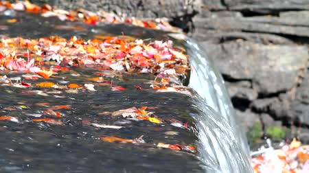belfast : A video of fall leaves atop an old dam with water flowing in the late fall.