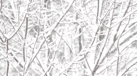 rüzgârla oluşan kar yığını : Video of forest branches laden with snow blowing in the wind.