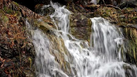 multimediální : Video of the flow of a natural water runoff from a forest onto rocks.