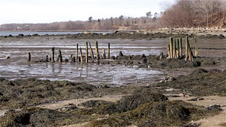 apodrecendo : The remains of an 1800s pier in Stockton Springs, Maine with a seagull flying in the background.