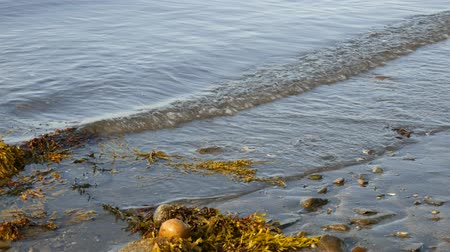 chaluha : Close view of gentle waves washing ashore at low tide on the coast of New England in the early morning light.