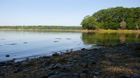 chaluha : Video of Long Cove in Searsport Maine in the summertime with the tide out showing a rocky shoreline.