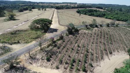 farm in brazil : Aerial view of countryside, farmer, field, agriculture and rural scene, Mococa, Brazil Stock Footage
