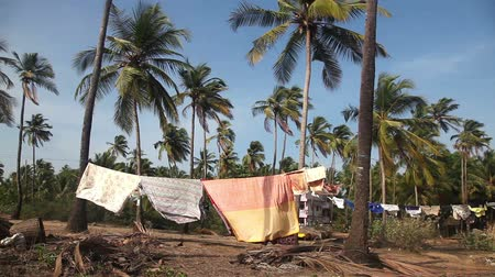 Cloth is drying beetween palm treeson the beach at sunset in Arambol, Goa Wideo
