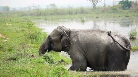 elefante : Elephant taking a bath in the river of Chitwan national park, Nepal
