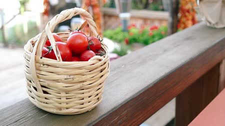 jardinero : Tomates cherry en el estuche. Archivo de Video