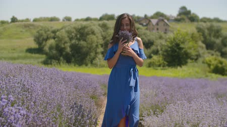 ароматерапия : Charming carefree young female in elegant blue dress smelling fresh fragrant lavender blosooms while walking through lavender field. Pretty cheerful woman enjoying unity with nature in countryside. Стоковые видеозаписи