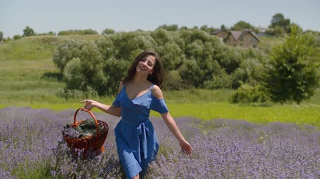 femininity : Charming smiling woman in stylish blue dress with picnic basket walking through fragrant lavender blossoms in countryside. Positive pretty female enjoying freedom and summer vacations in nature.