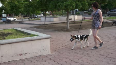 cachorro : Woman Training Her Dog in a Park