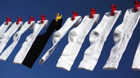sock : Shot of a bunch of white socks and one black sock hanging on a clothes line with red clothes pegs and blowing gently in the wind. Stock Footage