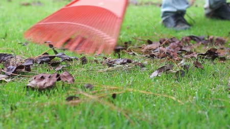 ogrodnik : Raking Lawn Closeup Dolly Wideo