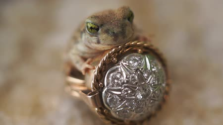toad : Frog Prince Ring Fairytale Fantasy