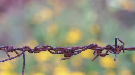 farpado : Old Barbed Wire Knot Macro Dolly Stock Footage