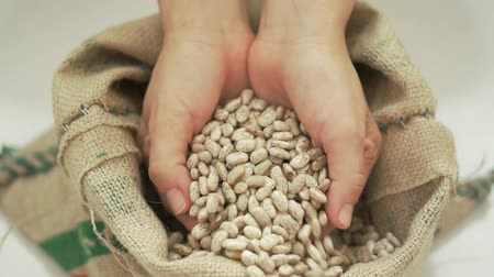 nasiona : Beans Falling Through Fingers into Bag