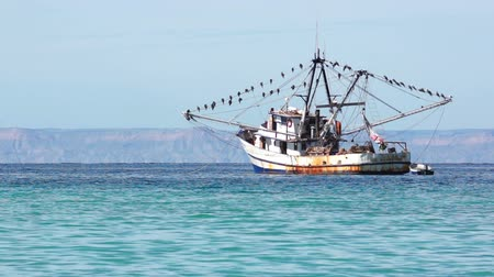 fishing industry : Old Fishing Boat With Many Seabirds