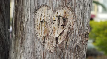 гравюра : Dolly shot of a lovers heart carved into the bark of a tree with a park background. Стоковые видеозаписи