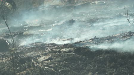 kartáč : Close up shot of smoke billowing off the charred ground in the aftermath of a grass fire or brush fire. Dostupné videozáznamy