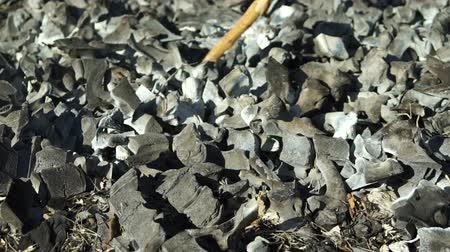 carbonize : Close up shot of someone moving and looking around in old burned bones and ashes with a stick. Stock Footage