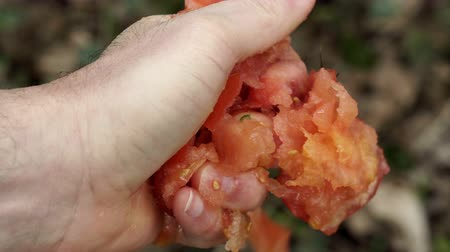 nasiona : Close up shot of an anonymous person crushing a fresh red tomato in his hand and exposing all the seeds juice and flesh inside the healthy vegetable.