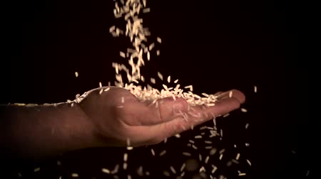 rolnik : hand holding rice grain isolated on black background. Wideo