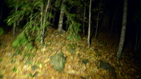 dead tree : The victim escapes from the maniac in horror. Flashlight on a wet autumn night forest. Stock Footage
