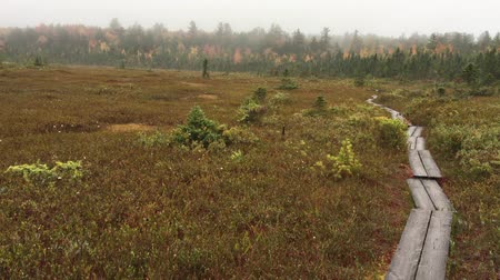 marsh : Cricenti Bog, a classic Sphagnum peat bog, in New London, New Hampshire on a foggy fall day. Stock Footage
