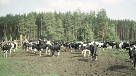 padok : Cows on a pasture farm