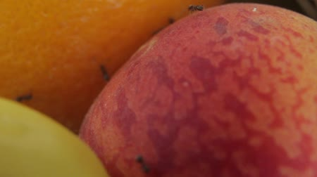 отпрыск : Ants on fruit. Close-up. Macro Стоковые видеозаписи